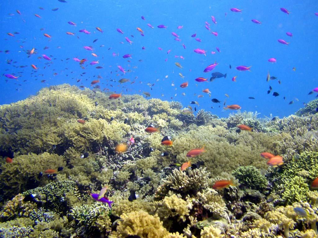 keindahan bawah laut Bunaken
